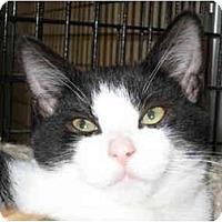 Adopt A Pet :: Orlando - Deerfield Beach, FL