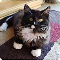 Adopt A Pet :: Dewey Daxter - Modesto, CA