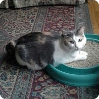Adopt A Pet :: Hope - Kalamazoo, MI