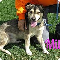 Adopt A Pet :: Milo - Scottsdale, AZ