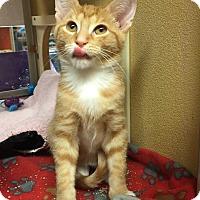 Adopt A Pet :: Chester - Rochester, MN