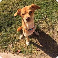 Adopt A Pet :: Elton - Phoenix, AZ