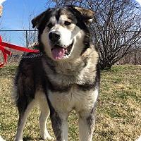 Adopt A Pet :: Lincoln - Mt Prospect, IL