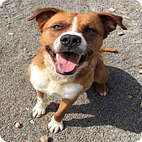 Adopt A Pet :: OKIE - Canfield, OH