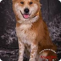 Adopt A Pet :: Miss Ellie - New Boston, NH