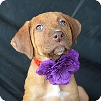 Adopt A Pet :: Cate Blanchett - Plano, TX
