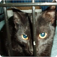 Adopt A Pet :: Molly - Westfield, MA