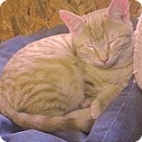 Adopt A Pet :: Jefferson aka Jeffy - Acworth, GA