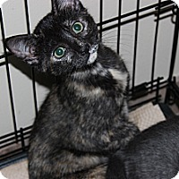 Adopt A Pet :: Janey - Secaucus, NJ