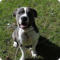 Adopt A Pet :: Boss - Villa Park, IL