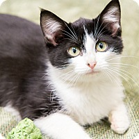 Adopt A Pet :: Mary - Chicago, IL