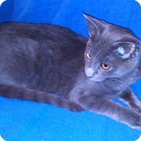Adopt A Pet :: K-Sasha6-Pierce - Colorado Springs, CO