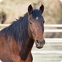 Adopt A Pet :: Rueger - El Dorado Hills, CA