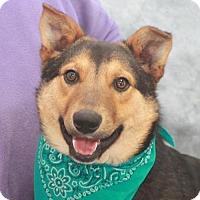 Adopt A Pet :: Baxter-PENDING - Garfield Heights, OH