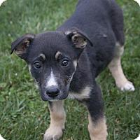Adopt A Pet :: Emma - Bedford, IN