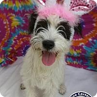 Adopt A Pet :: Pending - Venus - Arcadia, FL