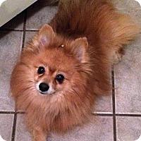 Adopt A Pet :: Rocky 3256 - Toronto, ON