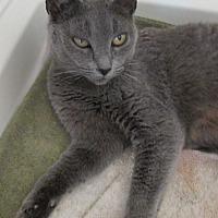 Adopt A Pet :: Mirai - San Bernardino, CA