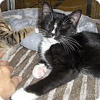 Adopt A Pet :: Chip - Richmond, VA