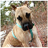 Adopt A Pet :: Lala - Forked River, NJ