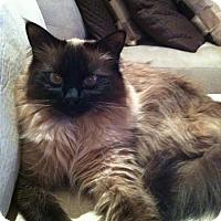 Adopt A Pet :: Duke - Laguna Woods, CA