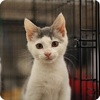 Adopt A Pet :: Sage - Richmond, VA