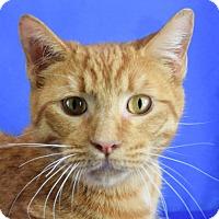 Adopt A Pet :: Oswald - Carencro, LA