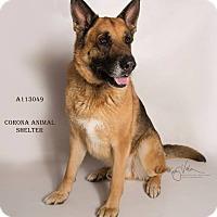 Adopt A Pet :: KENNEL 29 - Corona, CA