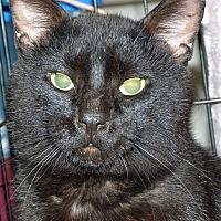 Adopt A Pet :: Marty - Stafford, VA