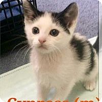 Adopt A Pet :: Cypress - Island Park, NY