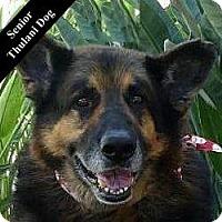 Adopt A Pet :: Sebastan T. - Cupertino, CA