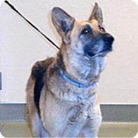 Adopt A Pet :: Miranda - Wildomar, CA