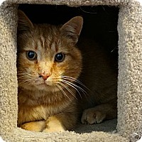 Adopt A Pet :: Ollie (aka Oliver) - Florence, KY