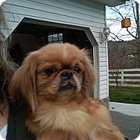 Adopt A Pet :: Ginger Rogers - Hazard, KY