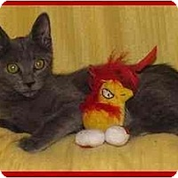 Adopt A Pet :: Kira - Orlando, FL