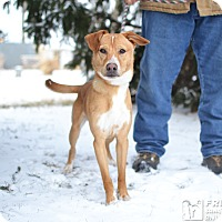 Adopt A Pet :: Snazzy - Springfield, IL