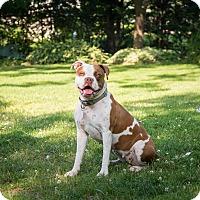 Adopt A Pet :: Lucy - Courtesy Post - Rochester/Buffalo, NY