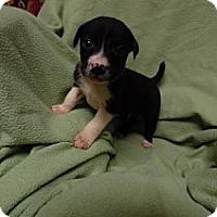 Adopt A Pet :: Marley meet me 7/22 - Manchester, CT