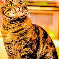 Adopt A Pet :: Nellie - Centerton, AR