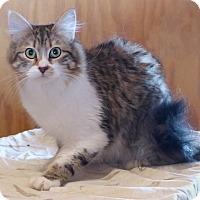 Adopt A Pet :: Cricket - Monterey, VA