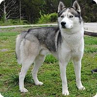 Adopt A Pet :: Lucky - Parsons, KS