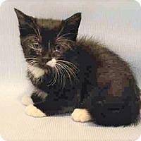 Adopt A Pet :: Charley - Hudson, NY