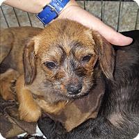 Adopt A Pet :: Flora - Brownsville, TX