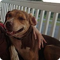 Adopt A Pet :: Maggie May - Chilhowie, VA