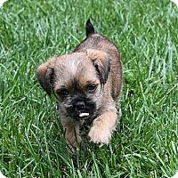 Adopt A Pet :: Fritzi - La Habra Heights, CA