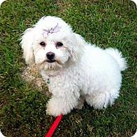 Adopt A Pet :: Emmy - Baton Rouge, LA