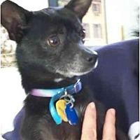 Adopt A Pet :: Bounty - Johnsburg, IL