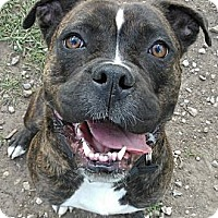 Adopt A Pet :: Tessa - Lapeer, MI