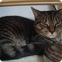 Adopt A Pet :: Houdini - Blackstock, ON