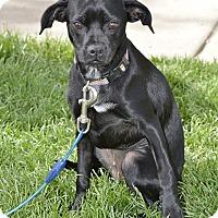 Adopt A Pet :: Maribel - Meridian, ID
